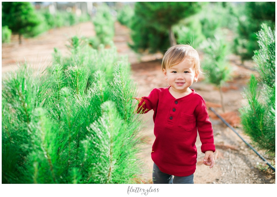 Christmas Tree Farm Portraits San Diego