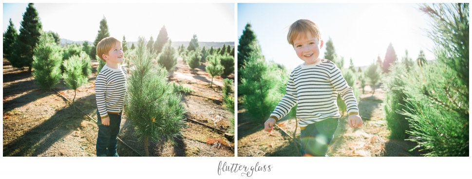 San Diego Christmas Tree Farm Portraits_0002.jpg