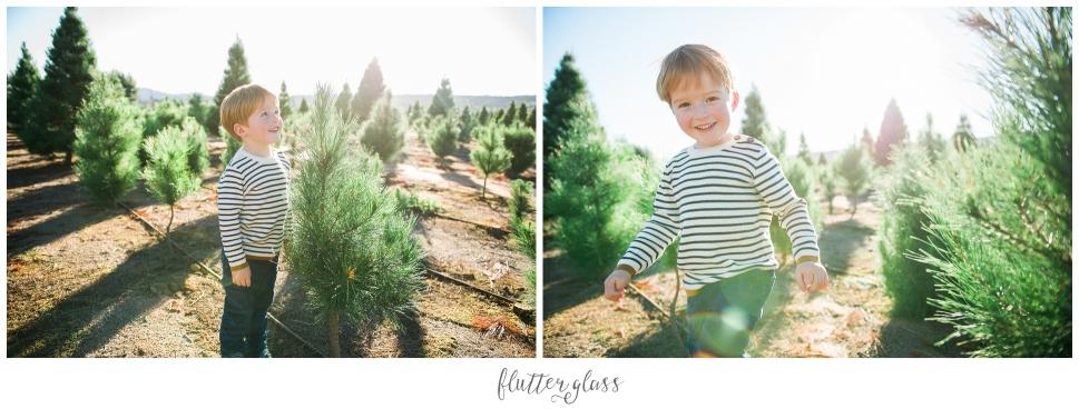 San Diego Christmas Tree Farm Portraits_0002.jpg