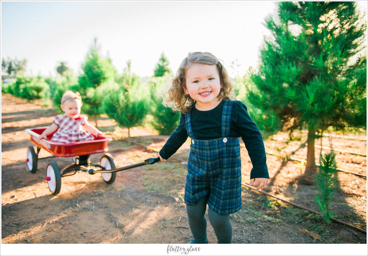 Holiday Mini Sessions San Diego Christmas Tree Farm